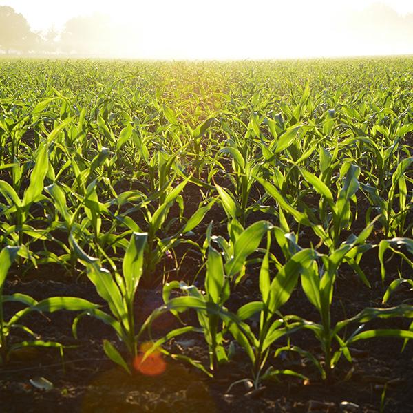 croper-category-Protección-de-cultivos