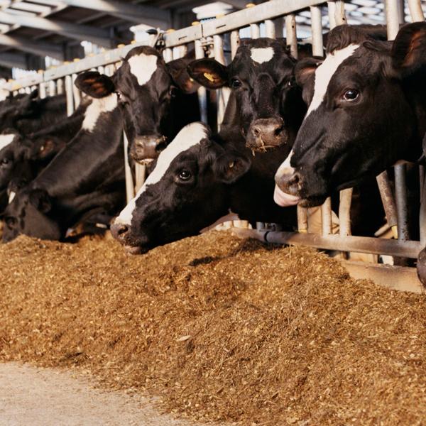 croper-category-Nutrición-animal