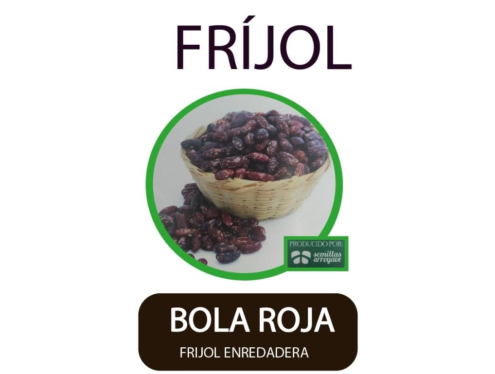 Frijol-Enredadera-Bola-Roja-Semillas