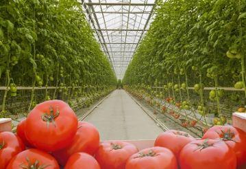 Planes-Ilimitados-De-Fertilización-Para-Utilizar-En-Un-Número-Ilimitado-De-Cultivos-(inc.-3-Usuarios)-Software-Y-Tecnología