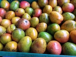 Mango-Criollo