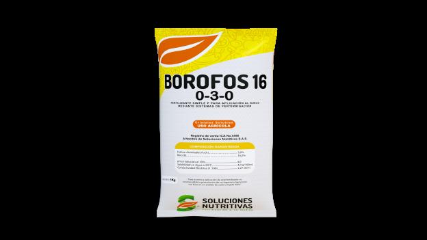 Borofos0000 624x351