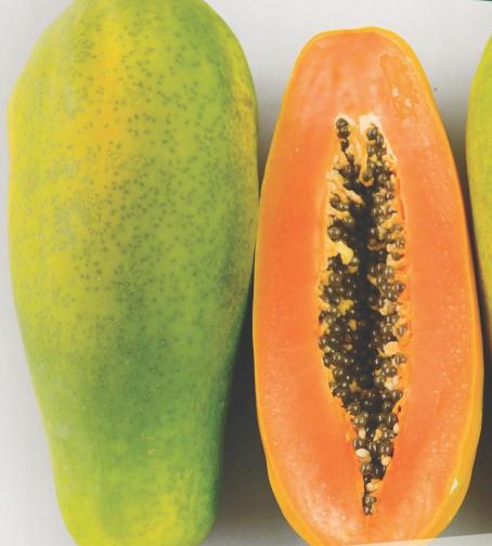 Semilla-De-Papaya-Tainung-Semillas