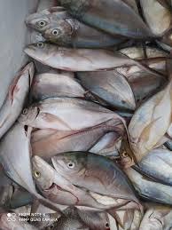 Pescado-Y-Mariscos
