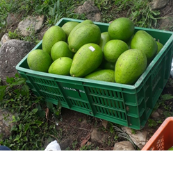 EL-CANEY-AGUACATE.png