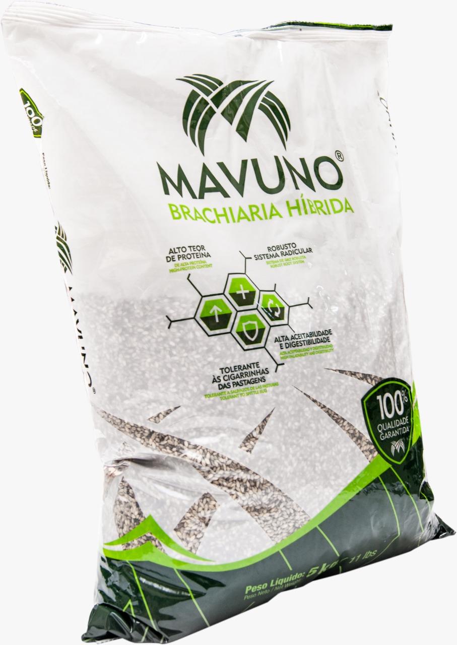 Semillas de pasto mavuno agroreza