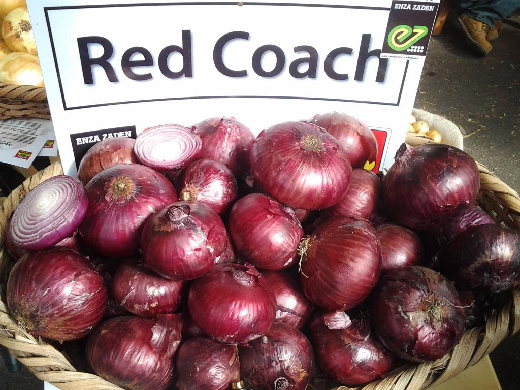 Cebolla red coach agroreza