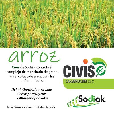 Civis_2.png