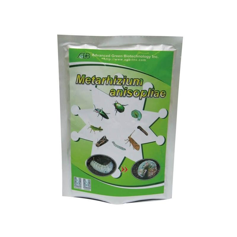 Insecticida-Metarhizium.jpg