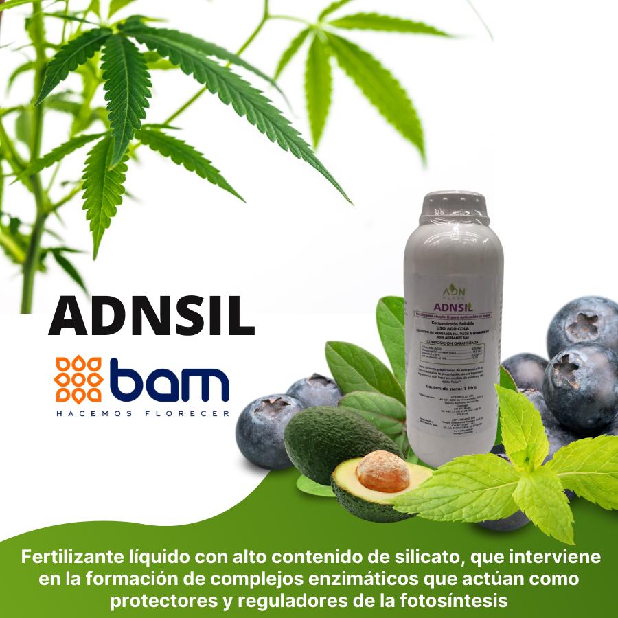 Imagen-ADNSIL.png