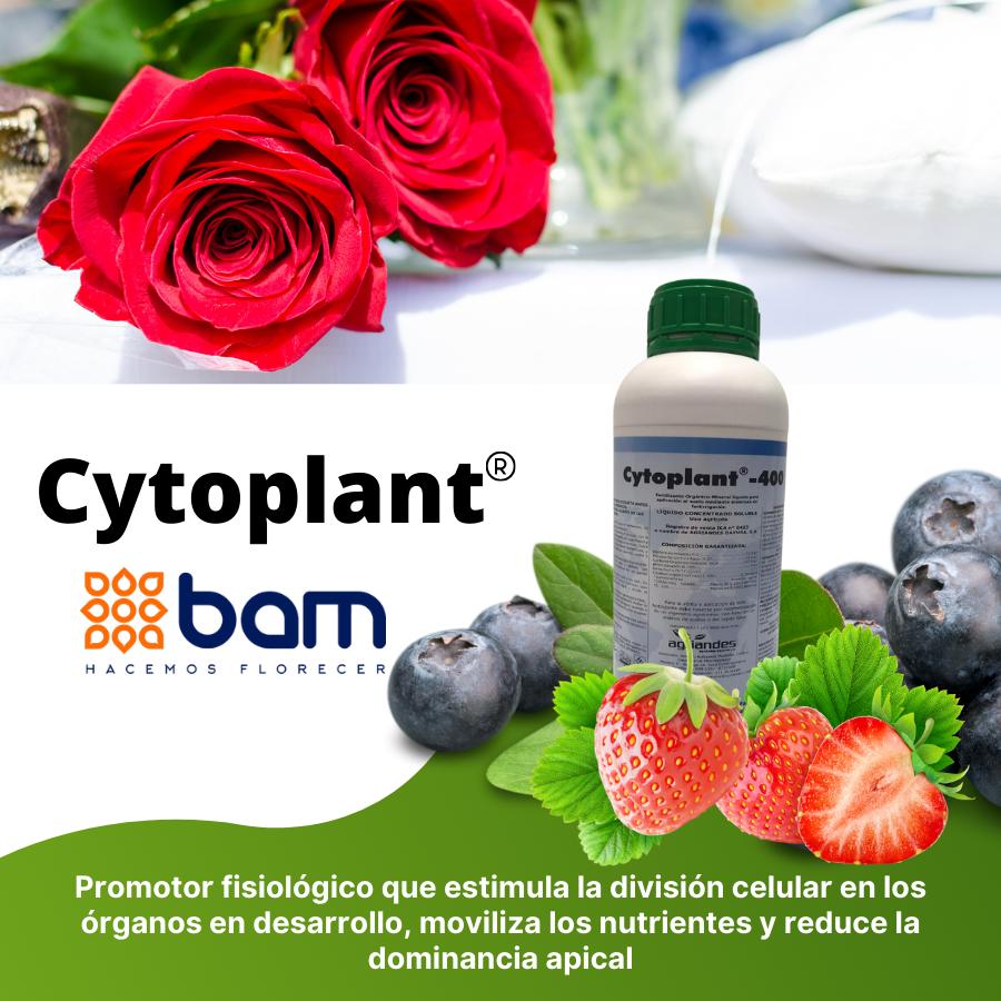 Imagen cytoplant