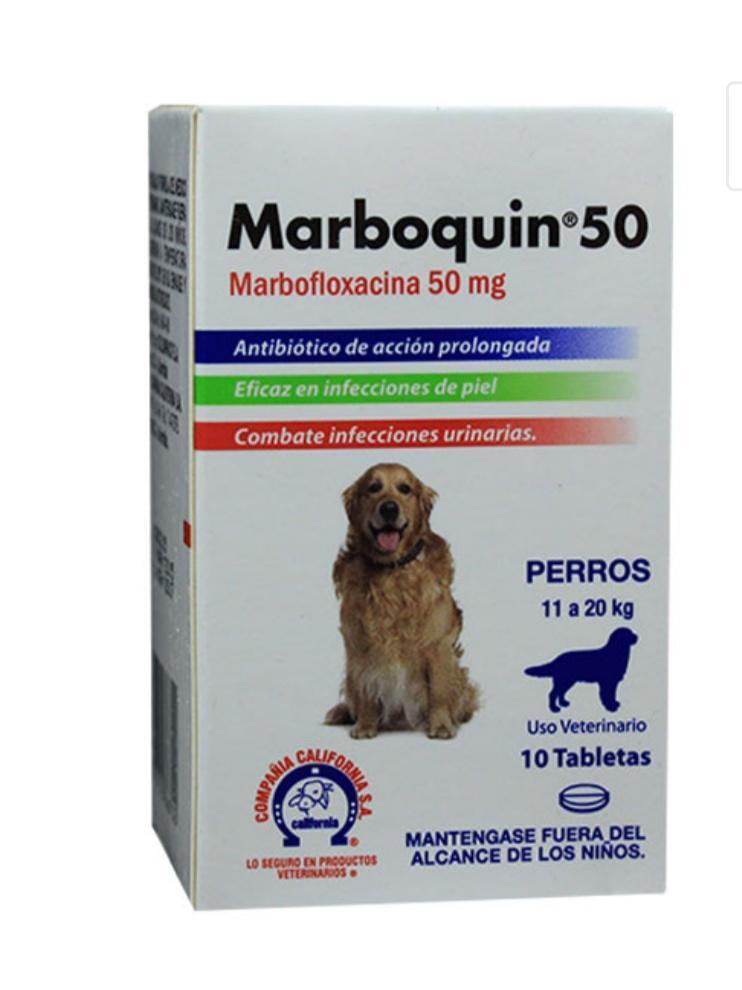 Marboquin 50 perro