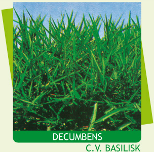 Semillas-Brachiaria-Decumbens-C.V.-Basilisk-Semillas-y-Semillas.jpg