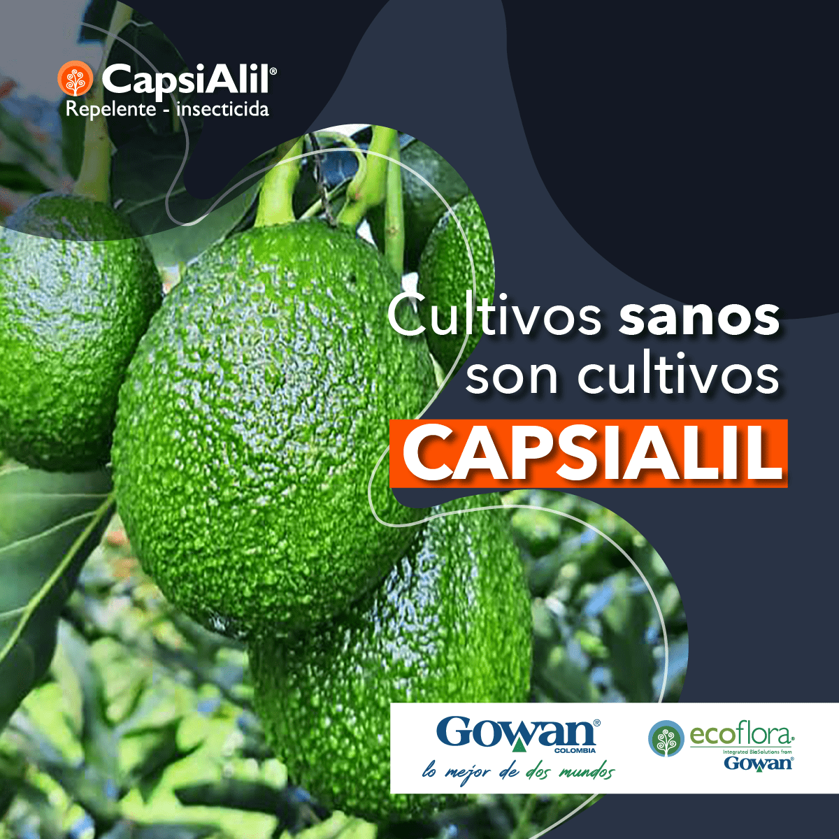 Gowan parrilla marzo cultivos sanos cultivos capsialil