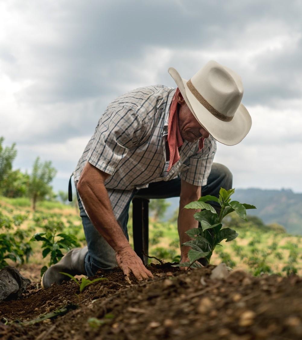 Seguro-agrícola.jpg